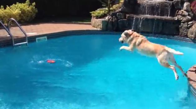 10 most epic ways to jump into a pool austin pool builders for Epic pool show